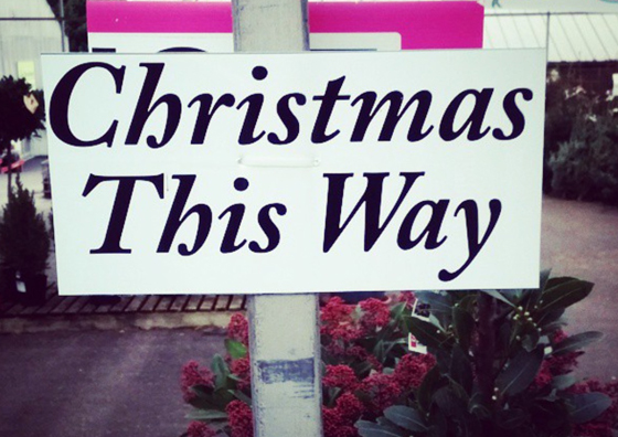 Christmas Tree Festival — Impressions Gallery