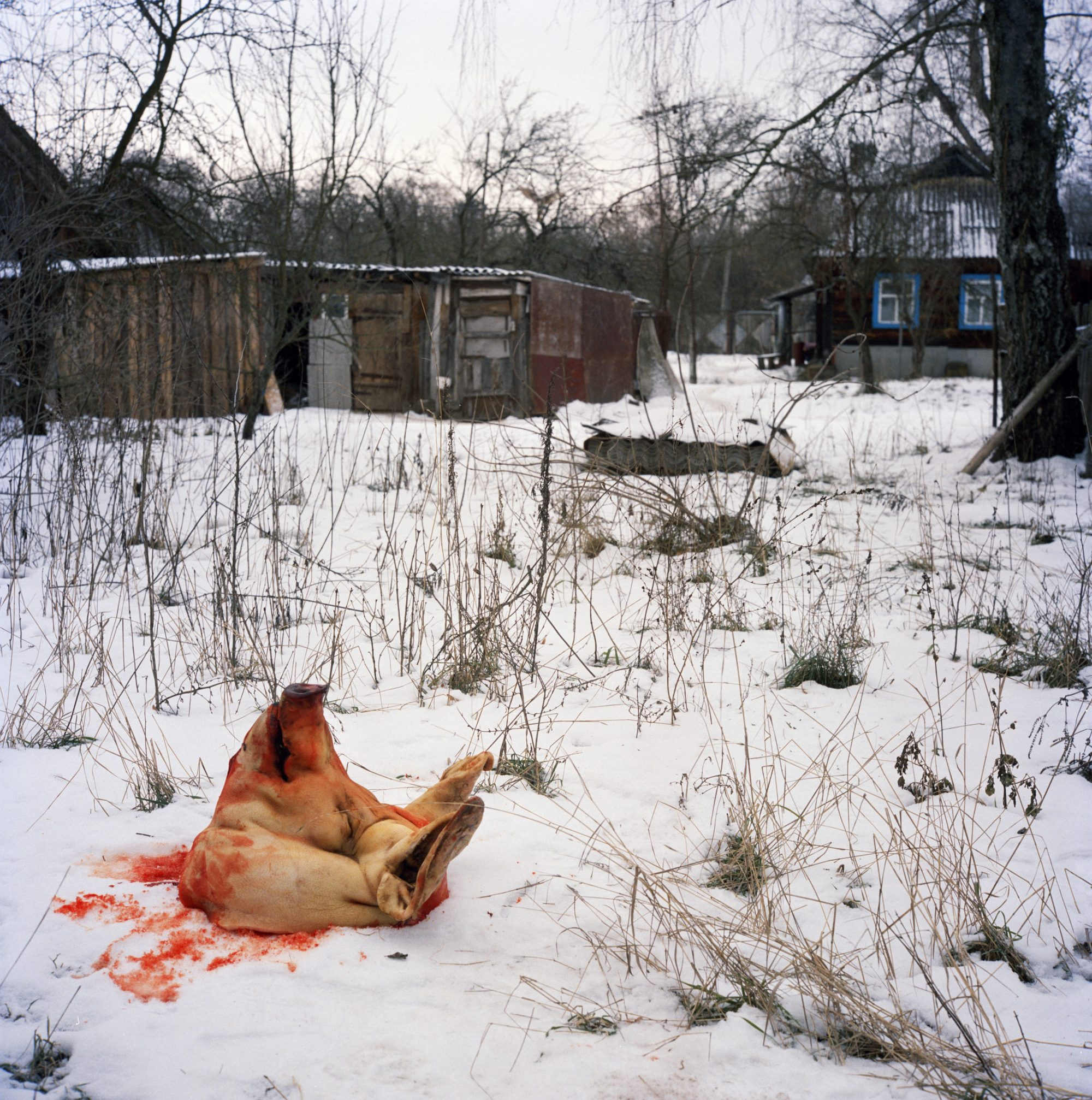 Pig's head © Rena Effendi/Prince Claus Fund/INSTITUTE